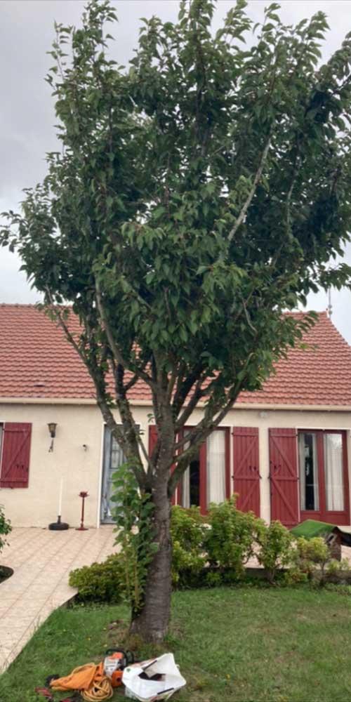 Paysagiste arbre à élaguer