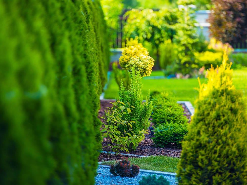 Max Garden arbustes jardin
