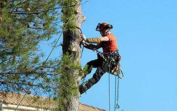 élagage arbre grimpeur paysagiste val d'oise et oise